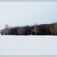 30 утро января 2015 ,Снег - Роща - Небо :: Алексей Медведев