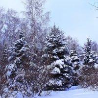 Свита Её Величества Зимы :: Татьяна Ломтева