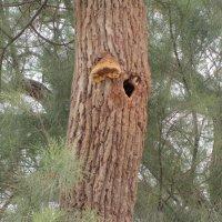 Гнездо опустело :: Герович Лилия