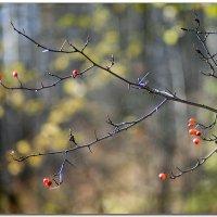 Осень :: Александр Нестеров