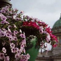 Невский сквозь цветы. :: Виталина Евгеньевна