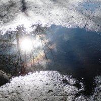 Солнце в лужице :: Галина Новинская