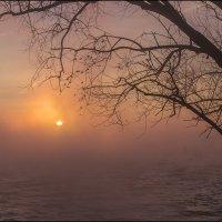 В розовом тумане :: Юрий Клишин