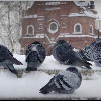Ну очень холодно! :: Владимир Шошин