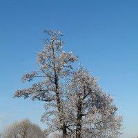 Зима,иней :: Ирина