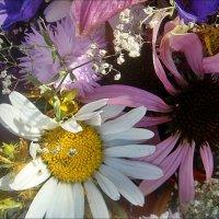Радость лета, милые цветы :: Нина Корешкова