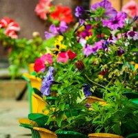 Кусочек лета. Буйство красок. :: Виктория Гавриленко