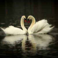 Влюблённые :: Alexander Andronik