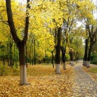 Осенью в парке :: Елена Семигина