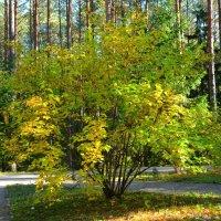Осень в парке :: Милешкин Владимир Алексеевич