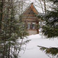 дом в лесу Хохловка :: petyxov петухов