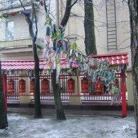 Буддизм в Петербурге :: Марина Домосилецкая