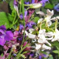 Полевые цветы. :: Наталья