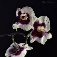 Орхидея с отражением в воде :: Светлана Л.