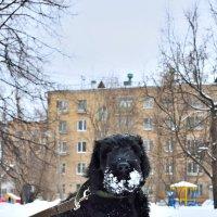 Первая прогулка :: Дмитрий Косачев