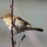 птичка :: petyxov петухов
