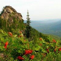 Рябина в горах :: Милешкин Владимир Алексеевич