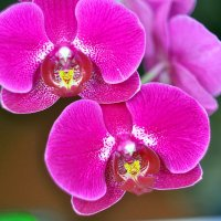 Орхидеи :: Vladimir Lisunov