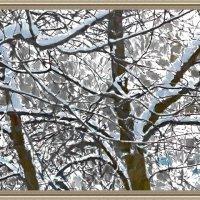 снежный день :: Михаил Николаев