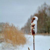 Зима.. :: Юрий Анипов