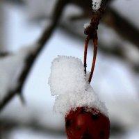Зимнее яблочко. Молодильное! :: Наталья Лунева