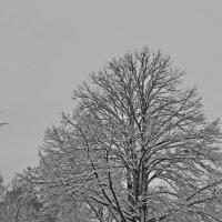 Когда за окном февраль... :: Tatiana Markova