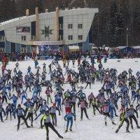 Лыжня России 2015 в Ижевске :: Владимир Максимов