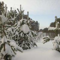 В зимнем лесу :: Валентин Котляров