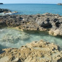 Коралловый уголок Багамских островов. :: Владимир Смольников