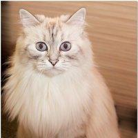 Кот брутальный :: OKCAHA Валова