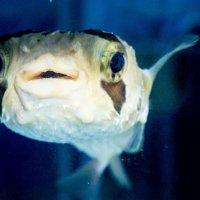 Рыба :: fotokor 72
