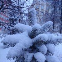 И опять выпал снежок! :: Galina194701