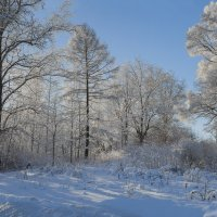 Зима пришла :: Valeriy Piterskiy
