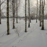 Зимний день :: Валентин Котляров