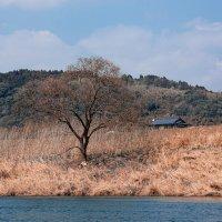 river :: Slava Hamamoto