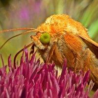 Бабочка :: Виктор Фин