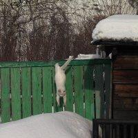 Прыжок :: Юрий Оржеховский