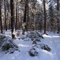 Легче тишины лежат снега... :: Лесо-Вед (Баранов)
