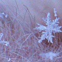 Снежинки :: Вероника Подрезова