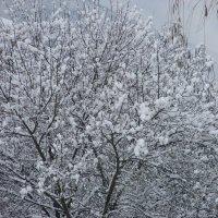 за 5 лет первый снег. :: Olga Grushko