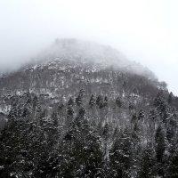 туман :: Katrin Galitsina