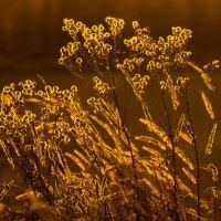 золото осени :: Евгений Меркулов