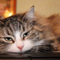 моя кошка :: Валентина Боровкова