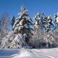 Зима в Токсово :: Сергей