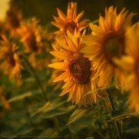 Немного летнего тепла :: Валерий Горбунов