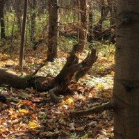 осень в лесу :: petyxov петухов