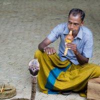 Заклинатель змей. :: Edward J.Berelet