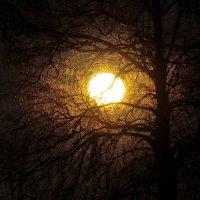 Луна в паутине :: Laimis S