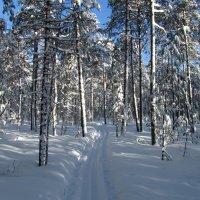 Наша зима :: Анатолий