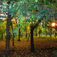 Осень :: Shans Musalova
